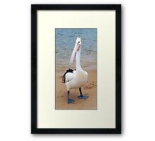 Percy Pelican Framed Print
