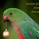 King Parrot Greeting card from Australia by Patricia  Knowles