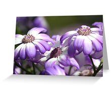 Three Purple Daisies Greeting Card