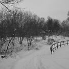 Winter at Toronto Park by Narin Ismail