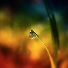 rainbow dew drop by © Karin Taylor