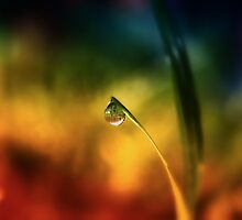 rainbow dew drop by © Karin  Taylor
