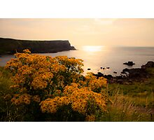 Wild flowers in sunset Photographic Print