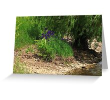 Purple by the Bank Greeting Card