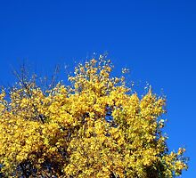 Yellow Autumn Tree by Henrik Lehnerer