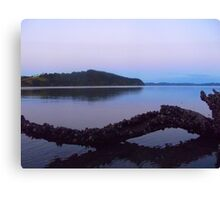 Oysters growing on a tree stump Canvas Print