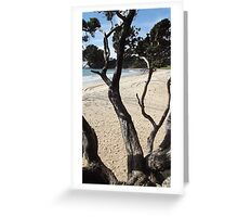 View from a tree - Langs Beach Greeting Card