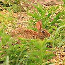Rabbit awaits your next move. by Adam Kuehl