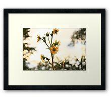 Sun Flower Framed Print