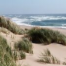 Oregon Dunes by ZWC Photography
