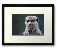 Meerkat Magic Framed Print