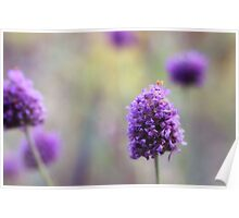 You Look Lovely in Lavender Poster