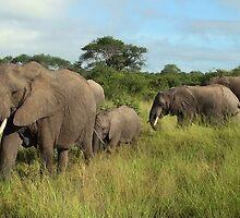 """""""elephant parade"""" by roger smith"""
