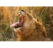 Piajo Male Yawning Photographic Print