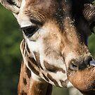 Giraffe by Ellesscee