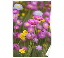 Wildflower Paradise Poster