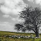 Ewe Tree by Gordondon