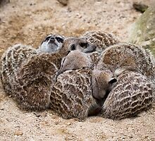 A Huddle of Meerkats by Ellesscee