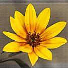 Sunflower Munchikin by Ticker