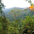 Springbrook National Park by MardiGCalero