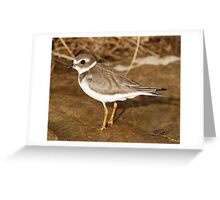 Plover on The Rocks Greeting Card