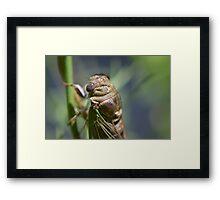Golden cicada Framed Print