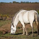 New Forest Pony by Ellesscee
