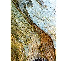 Bark abstract, with ants. Photographic Print