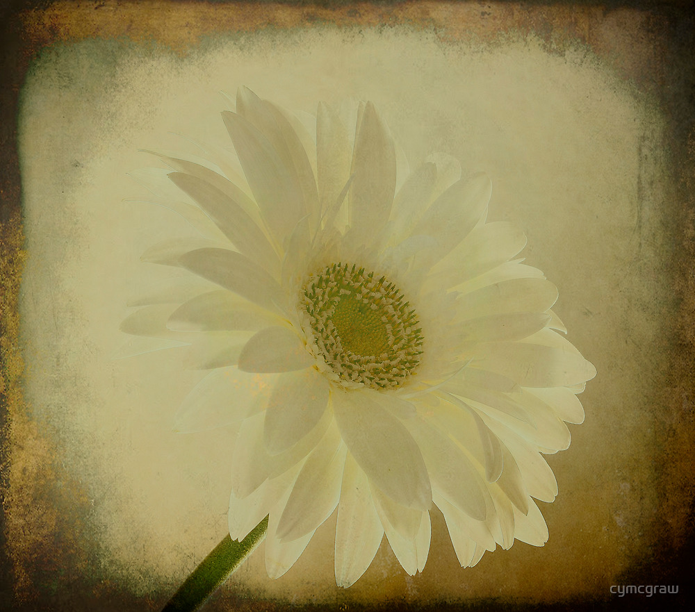 Untitled by Cynthia Broomfield