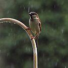 Enjoying The Rain On a Hot Summer Day by Cynthia Broomfield