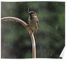 Enjoying The Rain On a Hot Summer Day Poster