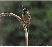 Enjoying The Rain On a Hot Summer Day Photographic Print