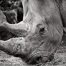 Rhino  by Ellesscee