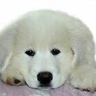 Puppy Love by vette