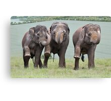 Three Elephants Canvas Print