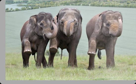 Three Elephants by Patricia Jacobs CPAGB LRPS BPE3