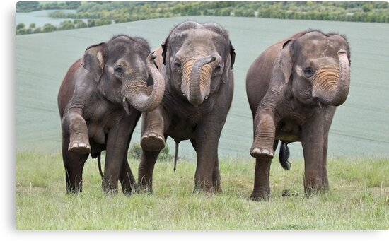 Three Elephants by Patricia Jacobs CPAGB LRPS BPE4