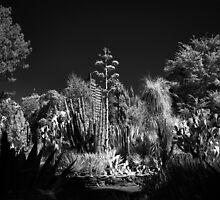 Cactus Garden, Capitol Park, Sacramento California by Rodney Johnson