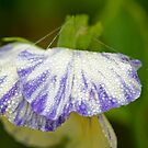 Autumn Dew bejewelled Sweet Pea. by Greybeard
