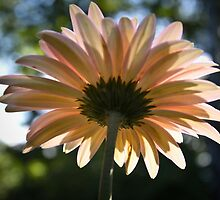 Reaching for the sun by KSKphotography