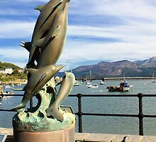 Barmouth Harbour Dolphins  by ImageMonkey