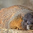 Snoozing by Jay Ryser