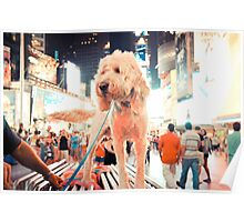 Times Square Pup Poster