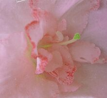 Abstract Macro Pink by Ana  Eugénio