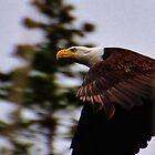 Eagle Eye by Lisa Baumeler