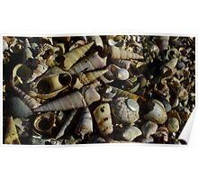 Shell boneyard.  Poster