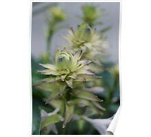 Pastel Plants Poster