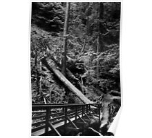 Muir Woods in Black and White. 2012 Poster