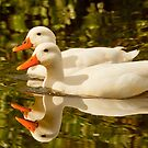 like ducks in a row by Anton Alberts