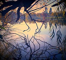 Autumn Tones, Lake Weeroona by Lozzar Landscape